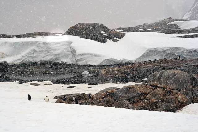 Petermann Island is home to the world's southernmost colony of Gentoo penguins.