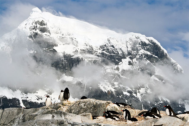 Gentoo penguins at Jougla Point. In the background is Savioa Peak on Wiencke Island.