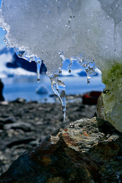 Ice drip at Danco Island.
